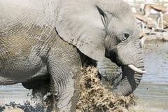слон ванны имея стоковая фотография rf