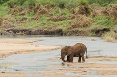 Слон вставленный в реке стоковая фотография