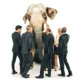 Слон в неуместном комнаты, иллюстрация вектора