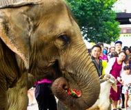 Слон есть арбуз Стоковые Фотографии RF