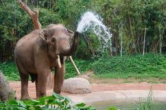 Слон делает брызг воды - ливень природы Стоковые Фото