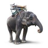 Слон изолированный на белизне стоковые изображения