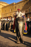Слон Индии с красочный paintting с mahout на верхней части на янтарном дворце, Раджастхане, Индии Стоковая Фотография RF