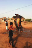 Слон Индия Стоковая Фотография RF