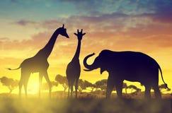 Слон и жирафы силуэта на саванне бесплатная иллюстрация