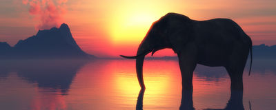 Слон и заход солнца Стоковая Фотография