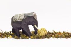 Слон и зеленый чай стоковое фото rf