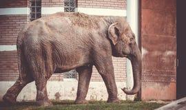 Слон идя в клетку Стоковые Изображения