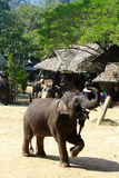 Слон катания Стоковая Фотография RF
