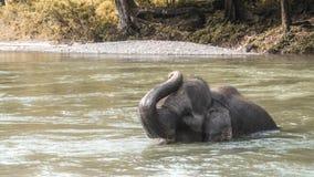 Слон купая в реке Стоковые Фото