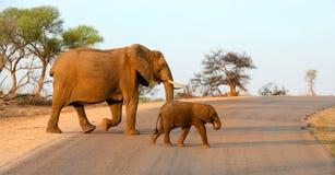 Слон матери и младенца идя через дорогу Стоковые Изображения