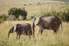 Слон 3 матери и младенца Стоковая Фотография