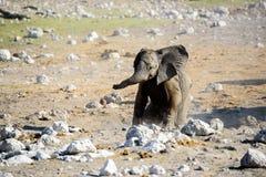 Слон младенца в открытом Стоковая Фотография
