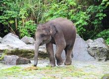 Слон младенца ест траву Стоковая Фотография