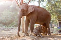 Слон младенца и своя мать на национальном парке Chitwan, Непале стоковое фото rf
