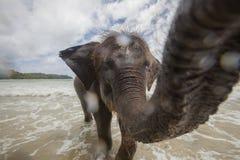 Слон младенца на пляже Стоковое фото RF