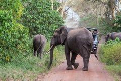 Слон младенца пересекая дорогу стоковое изображение rf
