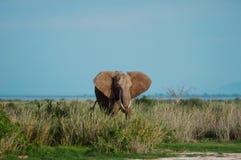 Слон младенца против голубого неба Стоковая Фотография