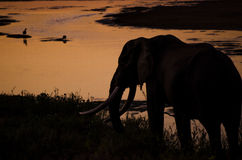Слон на заходе солнца Стоковая Фотография RF