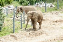 Слон на зоопарке Стоковая Фотография