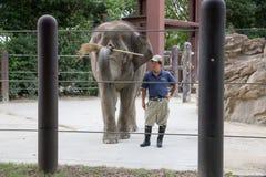 Слон на зоопарке Ueno, Японии Стоковая Фотография RF
