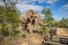Слон на MKuze падает в Южную Африку Стоковое Изображение RF