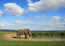 Слон на Waterhole Стоковое фото RF