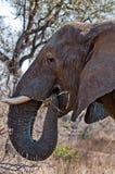 Слон подает Стоковые Изображения