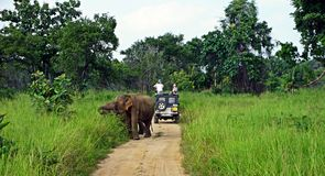 Слон приветствует туристов стоковое фото rf