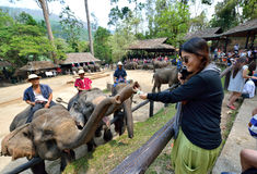 Слон прося подсказки Стоковые Изображения