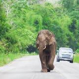 Слон Таиланд Стоковые Изображения