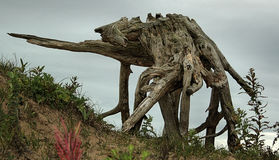 Слон хамелеона Стоковые Изображения RF