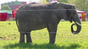 Слон цирка сток-видео