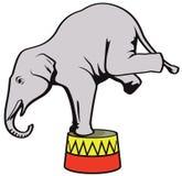 Слон цирка Стоковая Фотография
