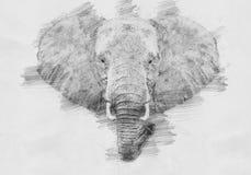 Слон Эскиз с карандашем Стоковые Фото