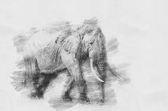 Слон Эскиз с карандашем Стоковые Изображения RF