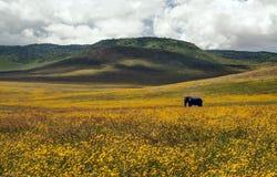 Слон Стоковое фото RF