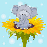 Слон artoon ¡ Ð Стоковое Изображение RF
