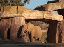 Слон, Loxodonta Africana стоковая фотография