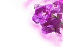 С орхидеями стоковая фотография rf