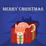 С Рождеством Христовым кот поздравительной открытки в коробке Стоковые Изображения