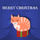 С Рождеством Христовым кот поздравительной открытки в коробке Стоковое Изображение