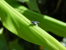 Случайная съемка макроса мухы Стоковое Изображение RF