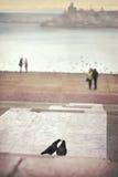Влюбленность везде Стоковая Фотография