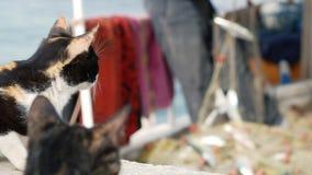 Сats που προσέχει τον ψαρά που παίρνει την αλιεία από τα δίχτυα Στο λιμένα Bodrum, Τουρκία απόθεμα βίντεο