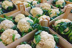 Fresh cauliflower in wooden boxes being sold on eco market royalty free stock photo