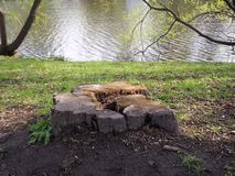 Ð¡enturies-old tree stump on the river bank royalty free stock image