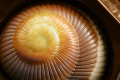Ð¡hocolate candy in a box, hazelnut praline. Chocolates in the form of ocean shells stock photography