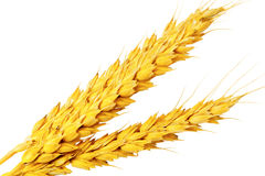 Ð¡ouple of ears of wheat.Isolated over white. Stock Images