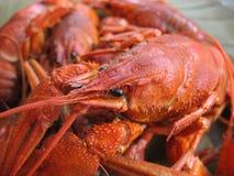 сrawfish Royalty Free Stock Images